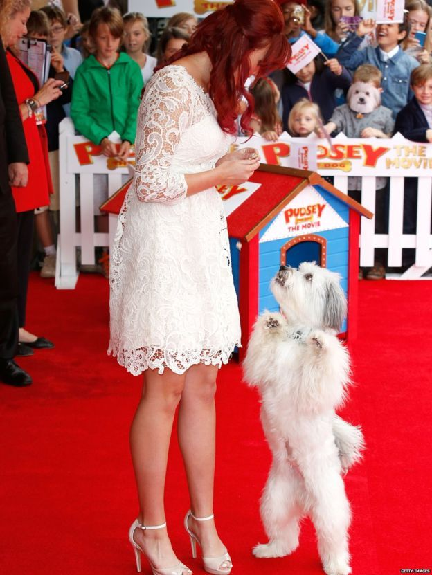R.I.P. Pudsey standing on his back legs at the premier of Pudsey the dog: The Movie