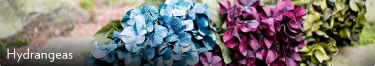 Silk Hydrangeas - Wedding Flowers or fillers