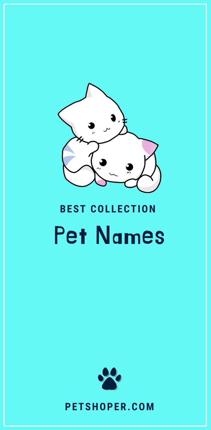 Best Collection Of Pet Names Popular Cute Names Ever Pet