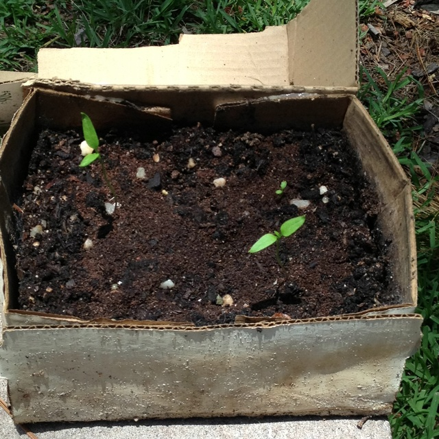 5 uses of soil 24 best images about cardboard gardening on pinterest