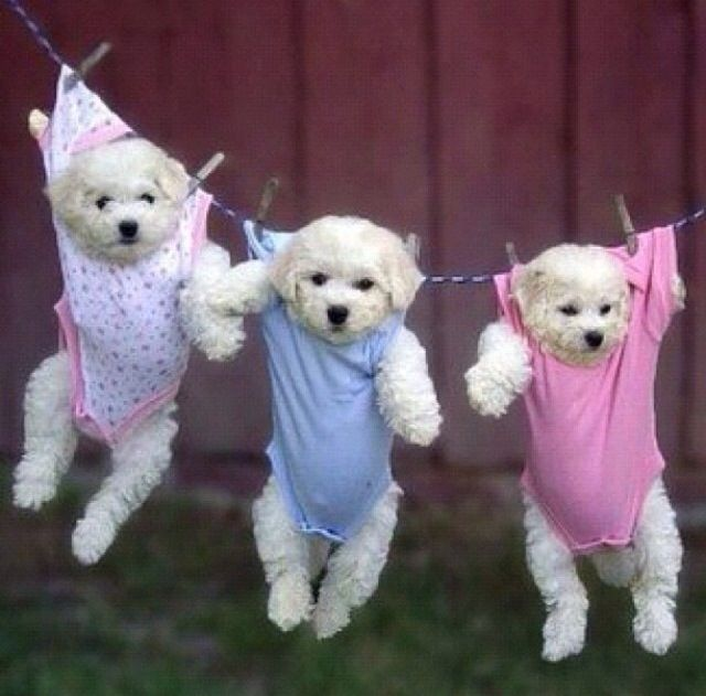 images of baby dogs - photo #39