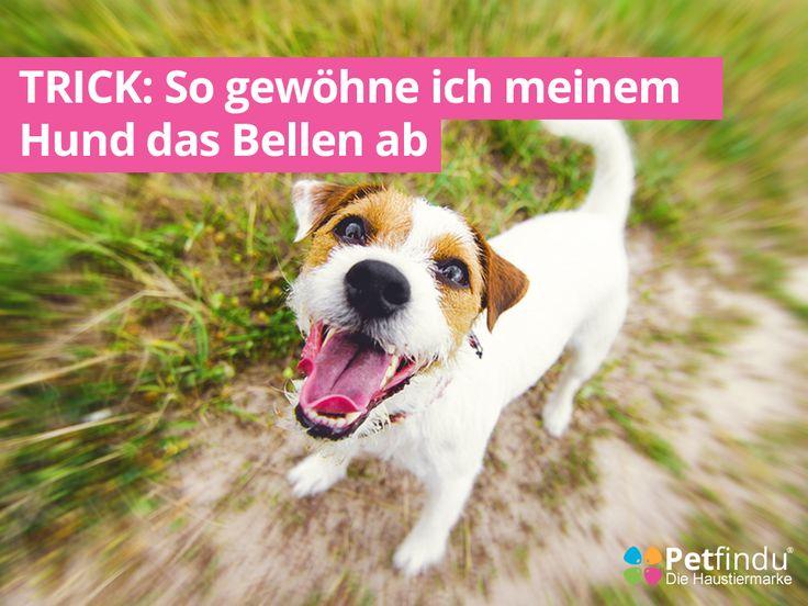 Wenn Dein Hund besonders häufig bellt, ist das nicht nur eine Belastung für Dich, sondern wahrscheinlich auch für Deinen Liebling. Denn ständiges Bellen kann unterschiedliche Auslöser haben - vielleicht liegt es an Dir selbst, dass Dein Hund sich... #bellenabgewöhnen #halter #kläffenabgewöhnen