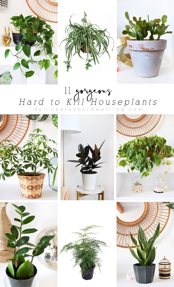 Pin On Trends Indoor Plants Urban Jungle