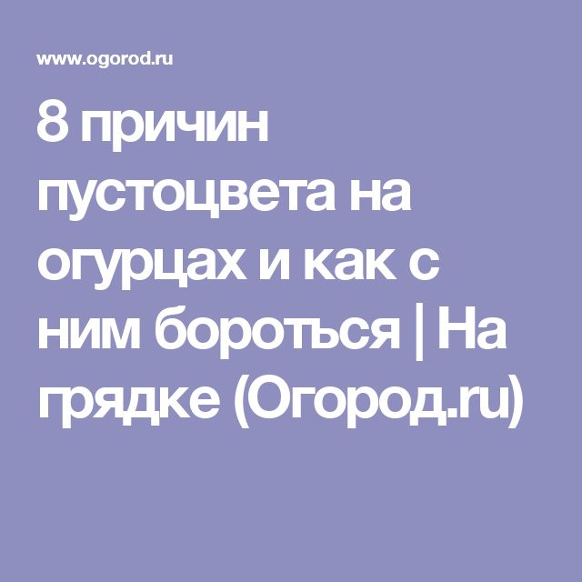 8 причин пустоцвета на огурцах и как с ним бороться | На грядке (Огород.ru)