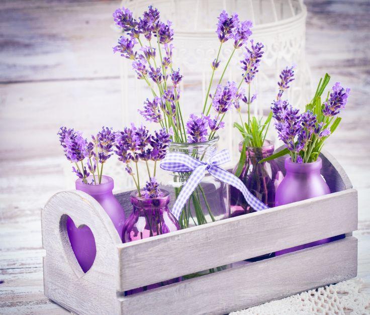 Лаванда Крупным планом Фиолетовый Банка Цветы