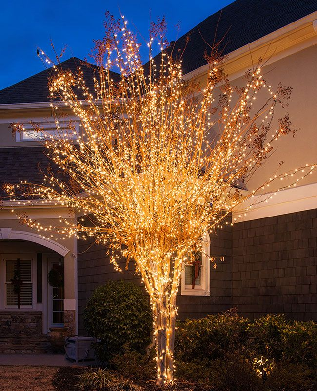 Wring Trees With Christmas Lights