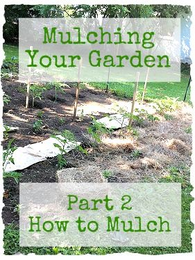 Mulching Garden Part 2: great additional info, mentions black walnut, but cant forget about tree-of-heaven