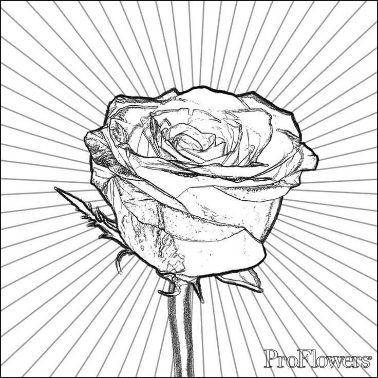 Proflowers Rose Coloring Pages Coloring Pages Color