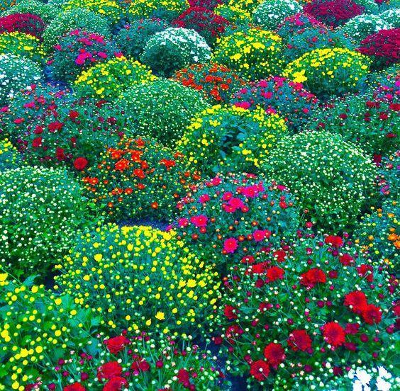 Το χώμα στο φυτώριο του Καλού τα πρωινά είναι νωπό. Σχεδόν μυρίζει αγιοδημητριάτικο, σου ανοίγει την ψυχή, σε ξεζαρώνει. Για λίγο. Όσο διαρκεί ένα πρωινό σουλάτσο, πριν από έναν μερακλίδικο καφέ.