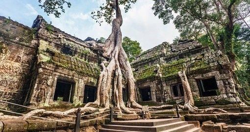 Ta Prohm Temple - Angkor Wat | Cambodia