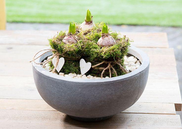 Creatief met bollen! #voorjaar #bollen #bloembollen #bulbs #intratuin