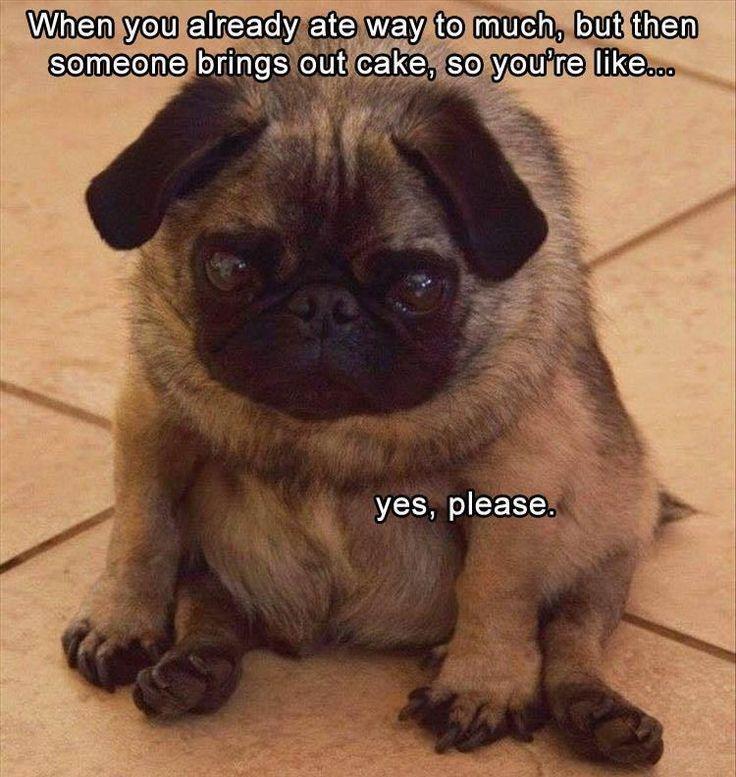Ja, das bin ich. Kuchen, ja bitte. #funnydogs  – Funny Animals