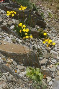 Dlaczego warto zakładać ogród skalny?