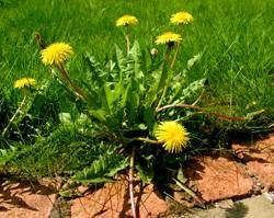 Your skin, hair, lawn and even tile can enjoy the benefits of this wondrous substance.