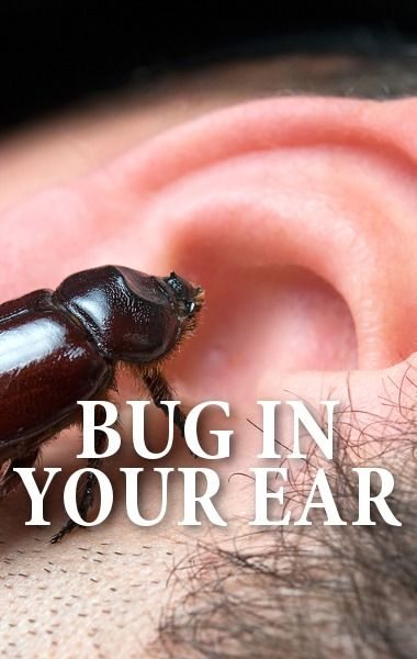 The Doctors heard two disgusting stories about bugs being found inside people's ears and noses. http://www.recapo.com/the-doctors/the-doctors-advice/drs-live-cricket-inside-ear-leech-inside-nose-causing-nosebleeds/