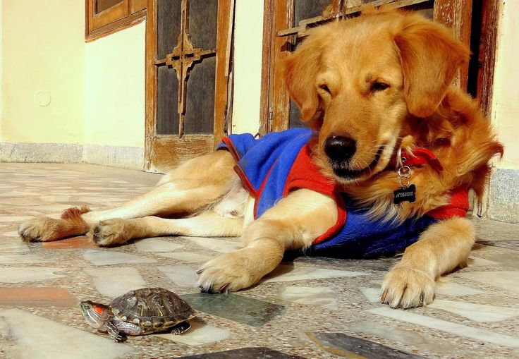 Celebrate National Turtle Day with these cute friendships between dogs and turtles.