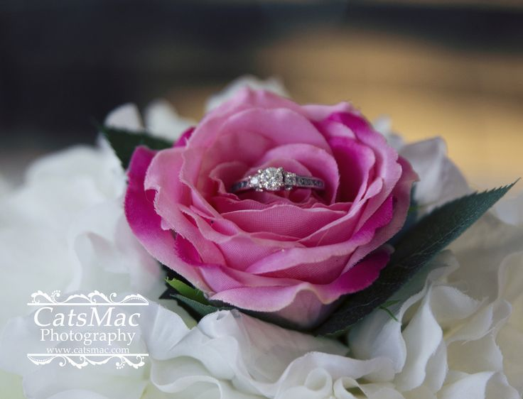 Engagement - CatsMac Photography