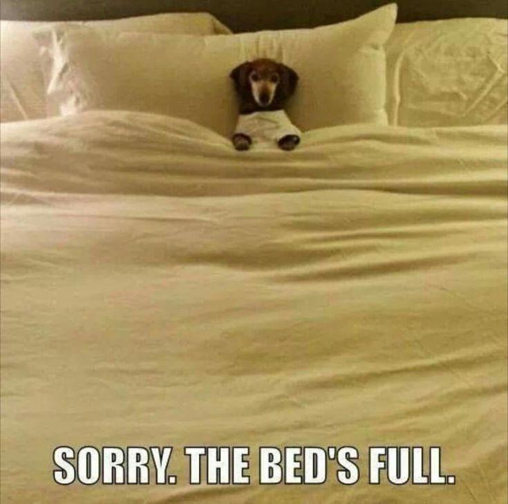Must be a comfy mattress!
