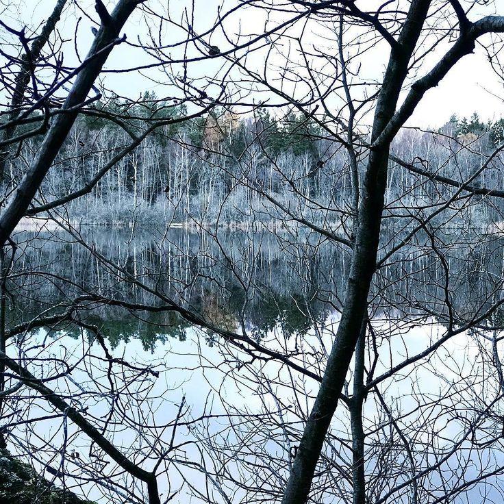 #naturelover #natureshot #hikingadventures #hikingday #mountains #trädgård #love #loveit #instalove #lovely #träd #water #garden #loveyou #iloveyou #sjö #inlove #naturelovers #lake #ilovemydog #doglover #catlover #guldkannan #lovelife #loveyourself #lovemyjob #foodlover #gardeninspiration #onelove #naturen