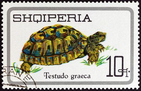 ALBANIA - CIRCA 1966  A stamp printed in Albania from the  Reptiles   issue shows Greek Tortoise  Testudo graeca , circa 1966