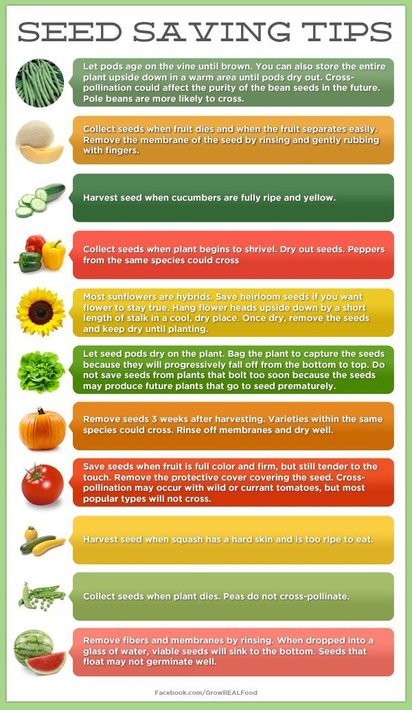 Seed Saving Tips and Ideas • Great Tips and Tutorials! Including from 'grow real food', this great chart of seed saving tips!