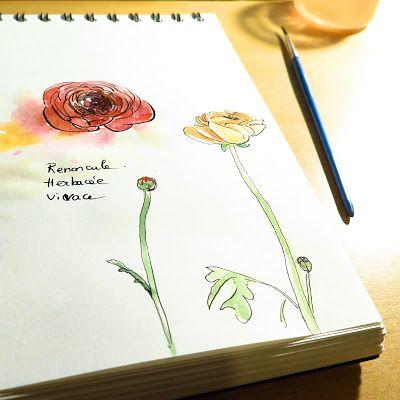 CaroLigne...: RenonculeAh, ce que j'aime ses couleurs et ses dou...