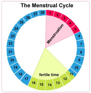De cyclus, menstruatie en eisprong