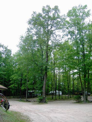 Cadillac Woods Campground at Cadillac, Michigan. This is where we fell in love with camping! We stayed in one of their cabins and a week later we owned our first camper! Love this place.