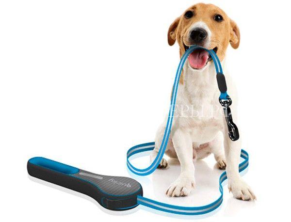 Как правильно выбирать поводок собаке  http://xn----dtbjxcjfbus6gj.xn--p1ai/dogs/%d0%ba%d0%b0%d0%ba-%d0%bf%d1%80%d0%b0%d0%b2%d0%b8%d0%bb%d1%8c%d0%bd%d0%be-%d0%b2%d1%8b%d0%b1%d0%b8%d1%80%d0%b0%d1%82%d1%8c-%d0%bf%d0%be%d0%b2%d0%be%d0%b4%d0%be%d0%ba-%d1%81%d0%be%d0%b1%d0%b0%d0%ba/ Для каждой собаки подбор правильного поводка очень важен, ведь этот предмет первой необхо�