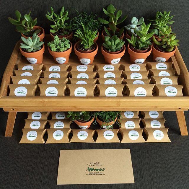 o.a. bij https://easypeas.be/nl/bedankjes/277-plantje-in-potje-met-label.html