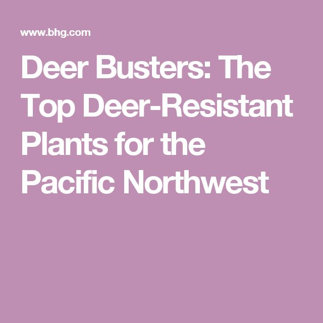 Deer Busters: The Top Deer-Resistant Plants for the Pacific Northwest