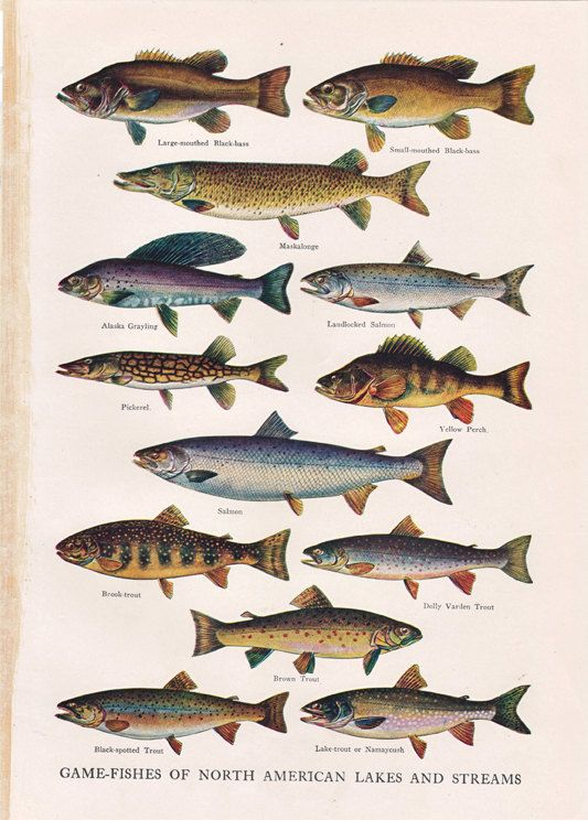 old dictionary print Game Fishes of North American Lakes and Streams