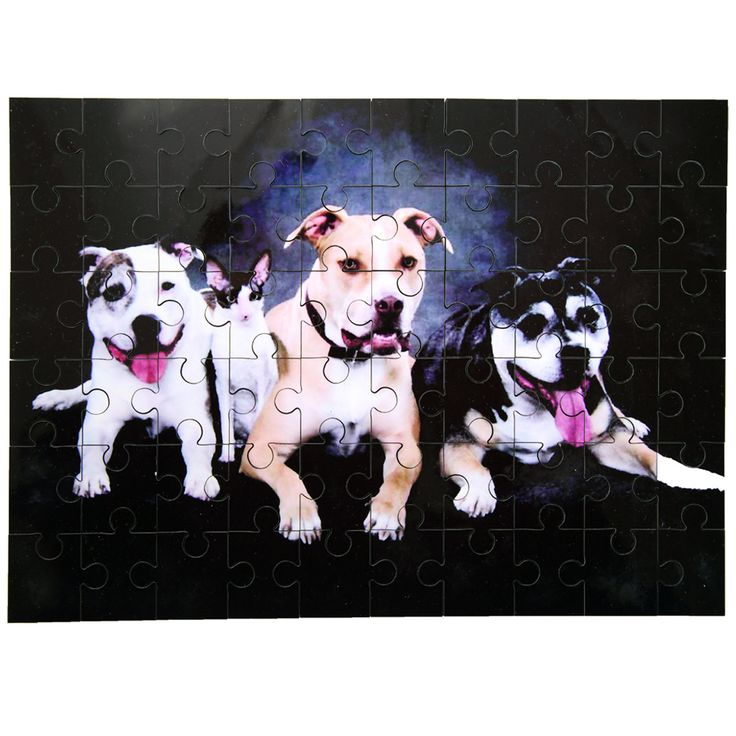 28 best easter gifts for pet lovers images on pinterest pet looking for a unique gift for your pet loving graduate this full color jigsaw puzzle personalized with a special pets photo would make a wonderful negle Images