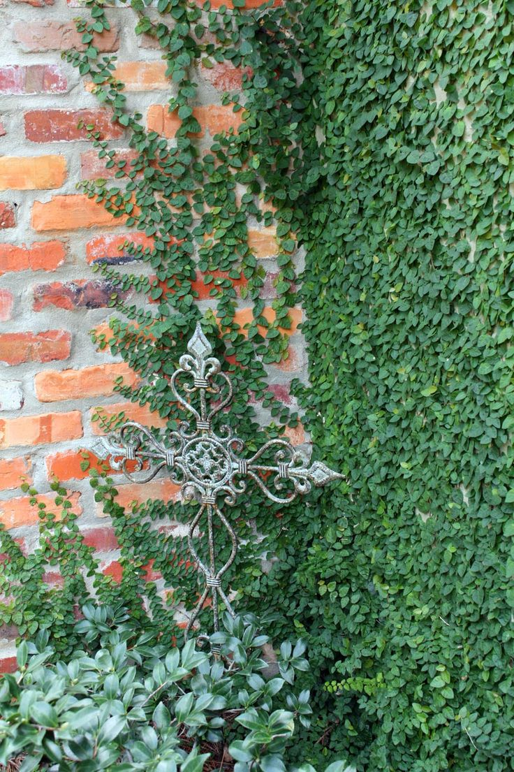 Creeping Fig Vine - its one of the few vines that will attach itself-and then when you spray it down it will keep your patio cooler!!