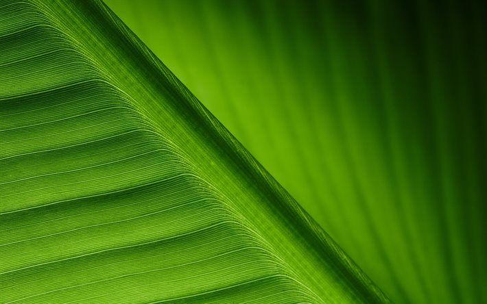 green leaf, close-up, lines, plant