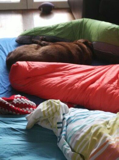 #Bubblestheblunderdog Star wars movie marathon sleepover with the girls is exhausting