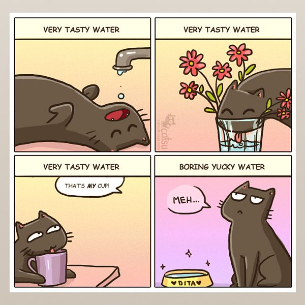 The one about staying hydrated | Catsu The Cat