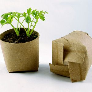 Use loo rolls or kitchen towel inners to make these simple biodegradable planters.  Just snip and fold as shown.