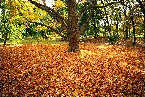 Arnold Arboretum, Jamaica Plain, Boston, MA
