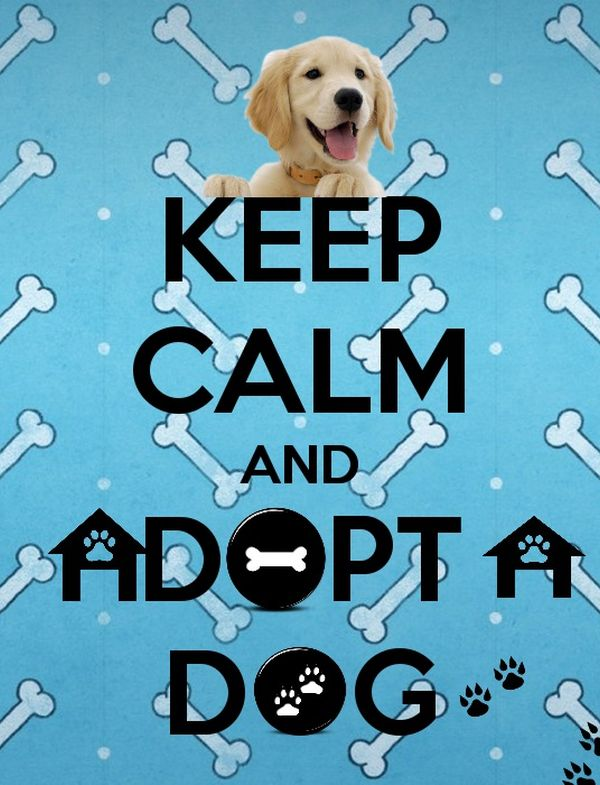 Keep Calm and Adopt a Dog .