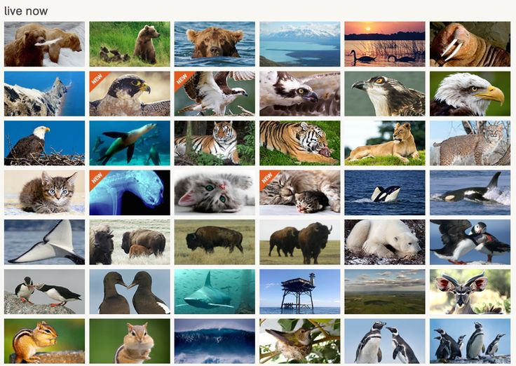 Live cams across the world - observation opportunities for the budding zoologists!