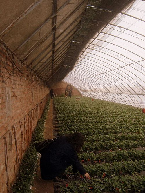 Reinventing the Greenhouse - earth sheltered greenhouses in China. . . That would certainly keep the chemicals sprayed by chemtrails off the food!