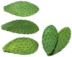 Propagate cactus plants by cutting and rooting a segment from the parent plant. Cactaceae is the scientific name for all types of cacti, with each species having its own specific name. All cacti are ...