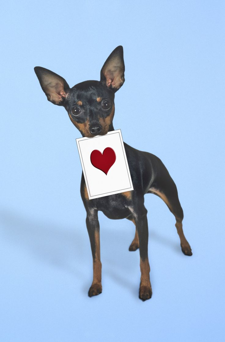 Oltre 1000 idee su immagini romantiche su pinterest for Link di san valentino da condividere