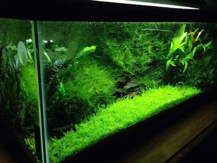 25 best ideas about 20 gallon long aquarium on pinterest for 20 gallon long fish tank