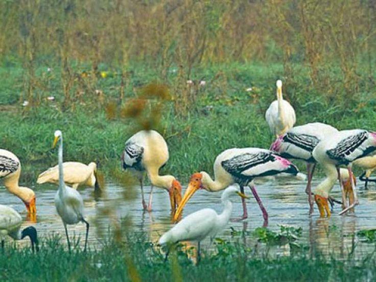 Ramgarh Vishdhari Wildlife Sanctuary - in Rajasthan, India
