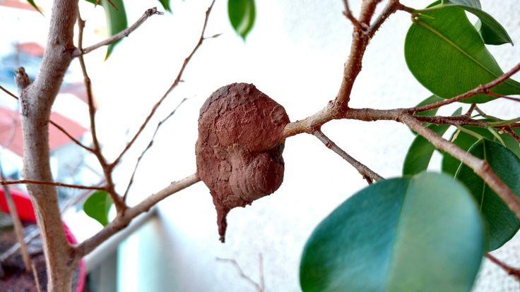 Ninho de vespa. Orifícios do ninho de barro são fechados frequentemente pelo inseto (Foto: Edlaine Garcia/VC no TG)