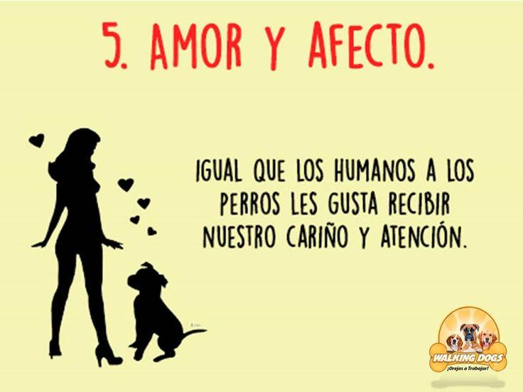 La demostración de afecto es necesaria para que tengas mejor relación con tu mascota