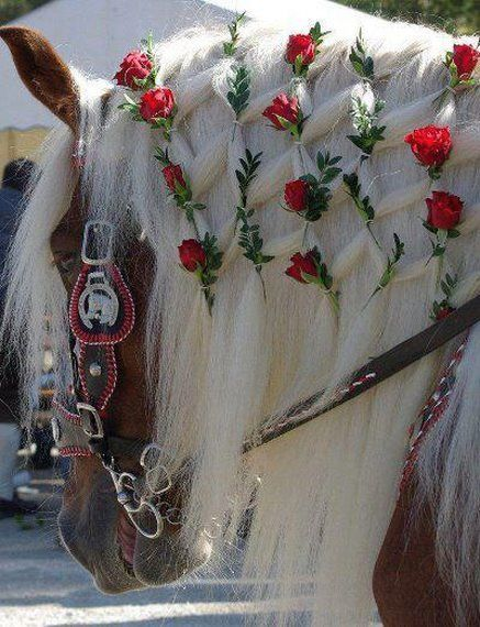 She's decked out for the Pasadena, Calif.  Rose Parade.  I think she knows she's pretty.