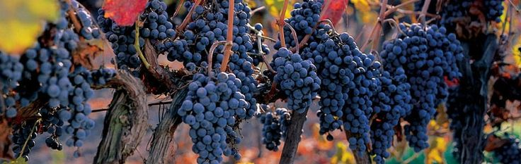 What makes Don Melchor an exceptional wine?  http://www.conchaytoro.com/winemakers-journal/what-makes-don-melchor-an-exceptional-wine/